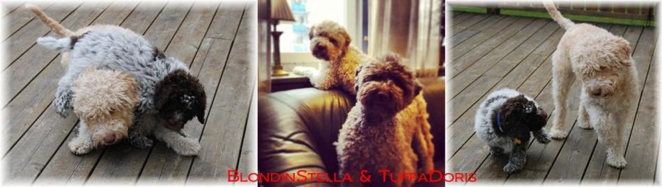 BlondinStella & TuffaDoris
